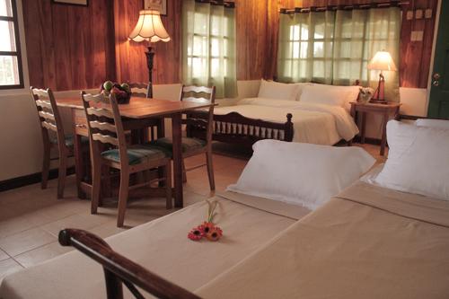 Cottage Amaryllis 8