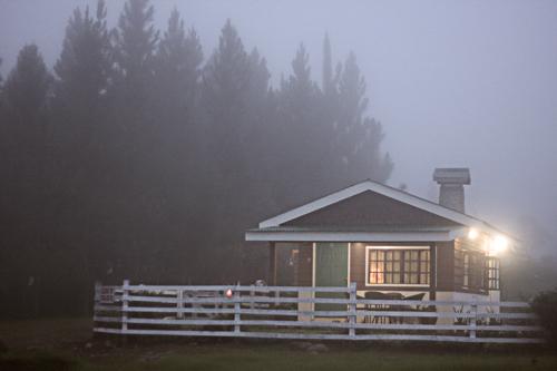 Cottage Amaryllis 5