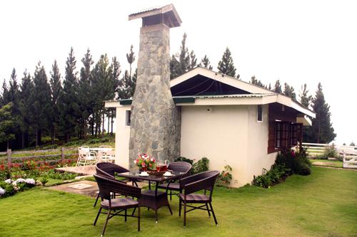 Cottage Amaryllis 2
